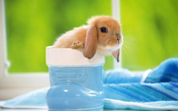 7 Interesting Facts You May Not Know about Rabbits