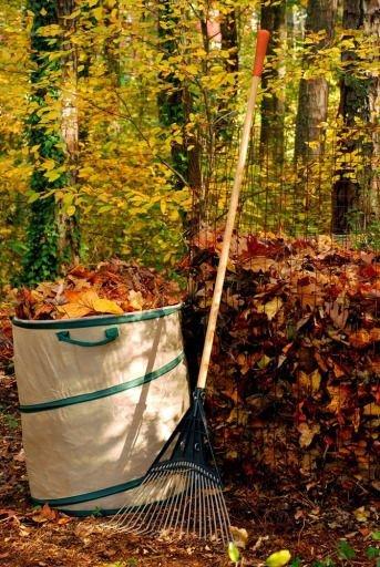 Rake Leaves for 25 Minutes