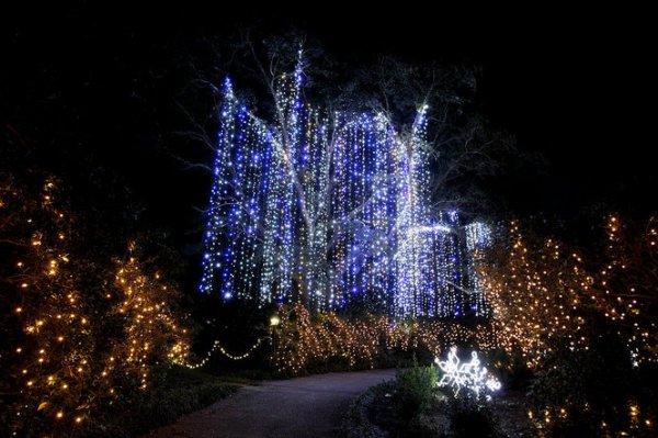 tree, night, light, christmas lights, christmas decoration,