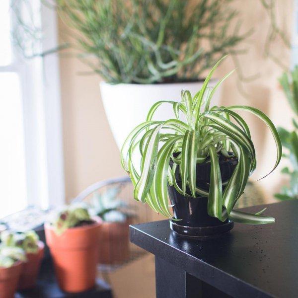 am lioration de la sant des plantes acheter pour purifier les votre maison et vous. Black Bedroom Furniture Sets. Home Design Ideas
