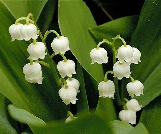 flower,plant,flora,green,botany,