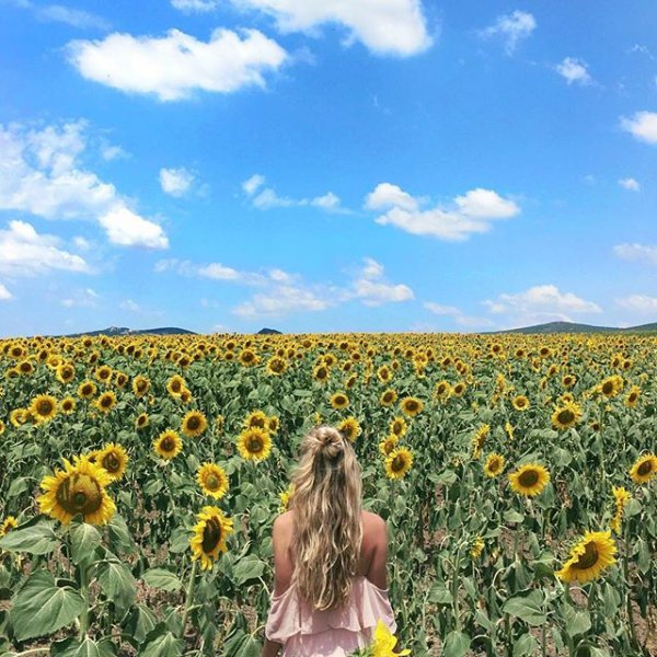 flower, field, plant, sunflower, yellow,