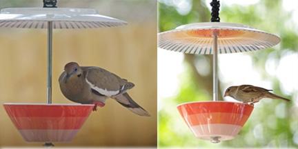 Receta de comida para pájaros: Suet casero | Almanaque del Viejo Agricultor