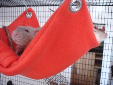 Hammock 12 easy and fun diy pet projects lifestyle - How to make a pet hammock ...