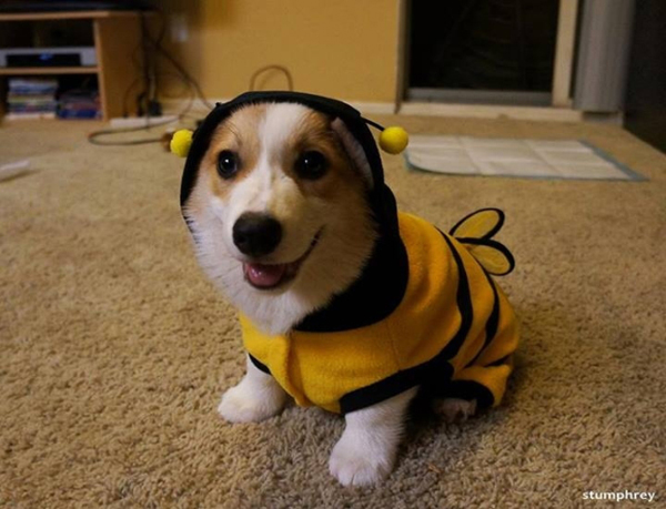 Just Bee…
