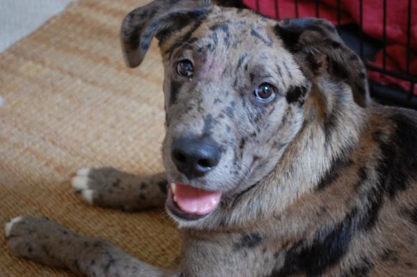 Dog type  Wikipedia