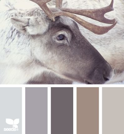 Inspired by Elk?
