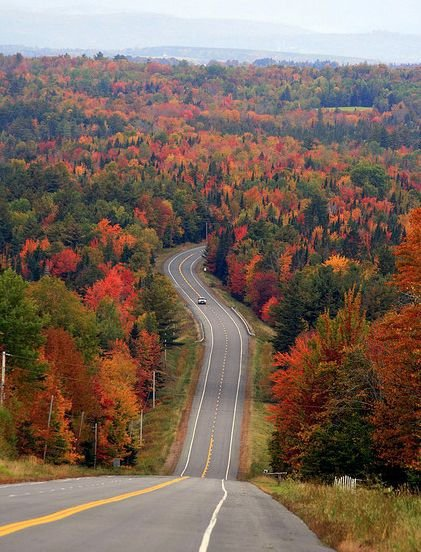 road, leaf, autumn, infrastructure, tree,