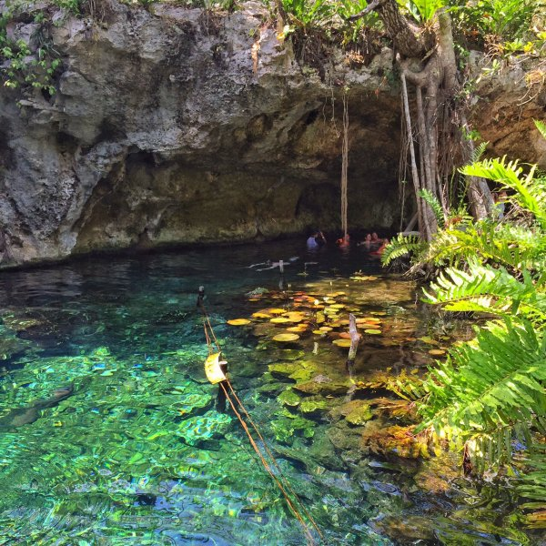 Join a Group Swim in a Cenote in Mexico