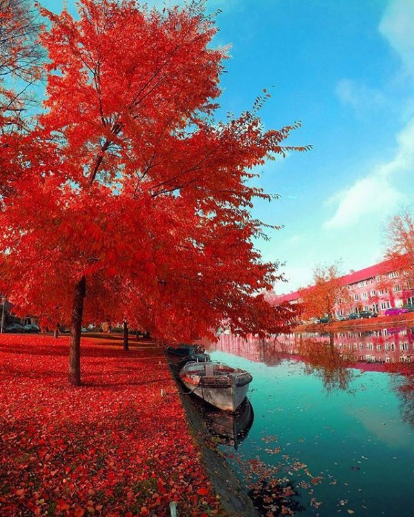 red, color, tree, autumn, reflection,