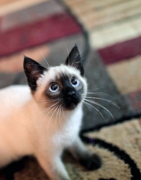 7 conseils pour essayer si votre chat n 39 utilise pas sa liti re community. Black Bedroom Furniture Sets. Home Design Ideas