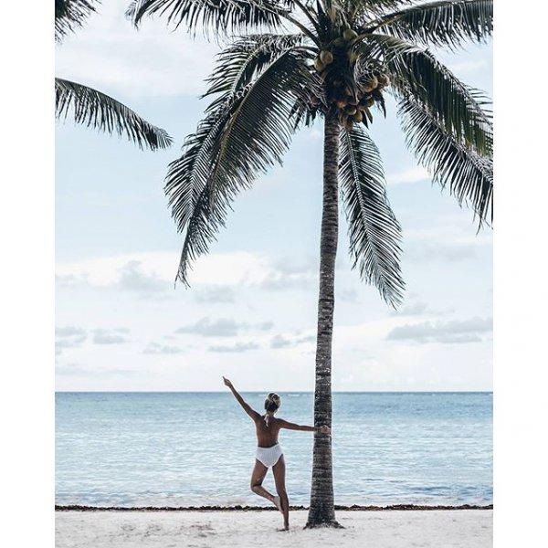 tree, palm family, arecales, beach, wind,