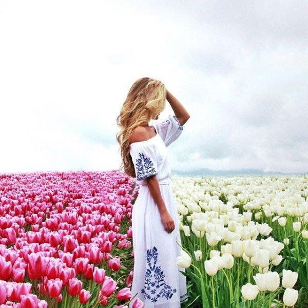 plant, flower, flowering plant, tulip, spring,