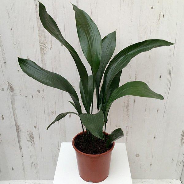 plant, flower, green, flora, botany,