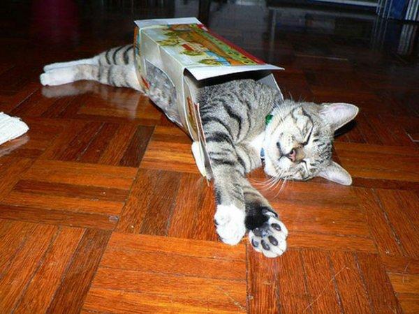 cat,mammal,vertebrate,cat like mammal,small to medium sized cats,