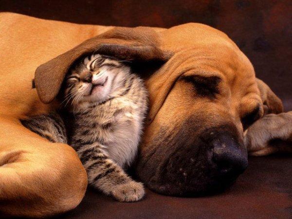 dog,mammal,vertebrate,dog breed,nose,