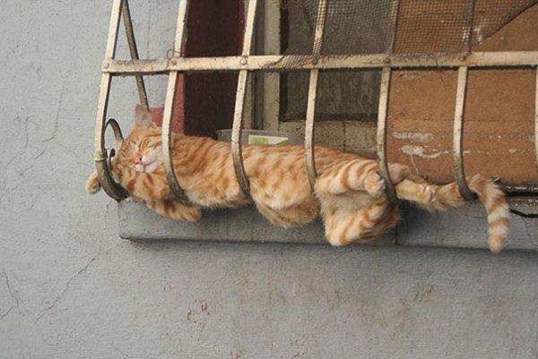 mammal,dog,cat,wood,animal shelter,