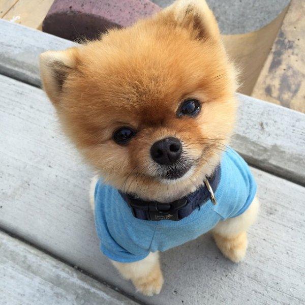 @jiffpom says Woof - Four Legged Cuteness: 23 Most ...