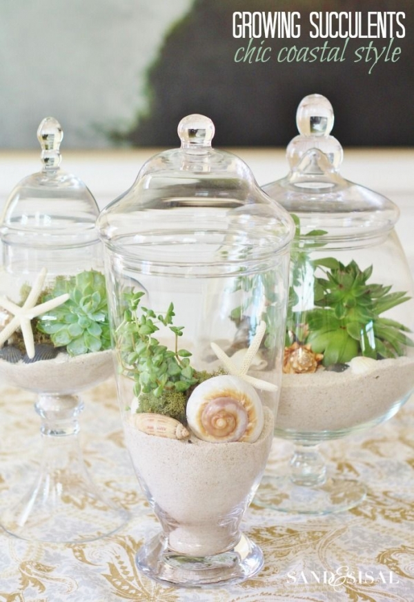 Growing Succulents in Apothercary Jars