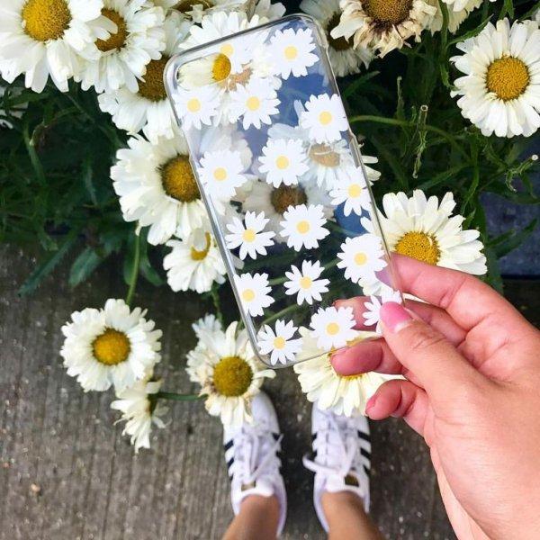 flower, daisy, cut flowers, daisy, plant,