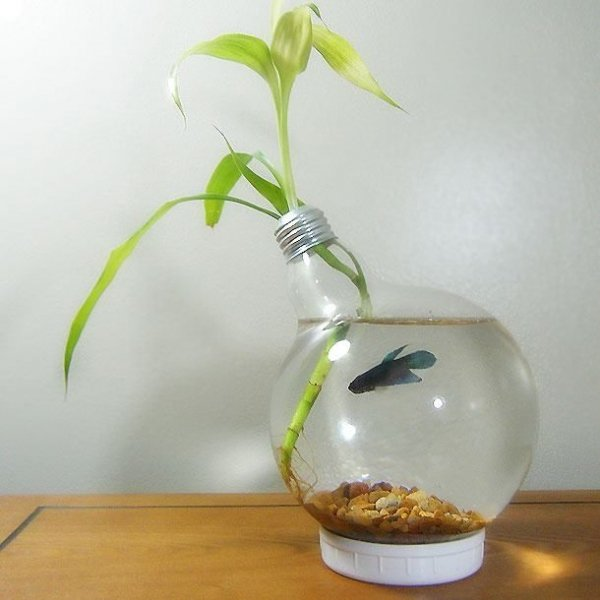 large light bulb beta fish aquarium 28 everyday items. Black Bedroom Furniture Sets. Home Design Ideas
