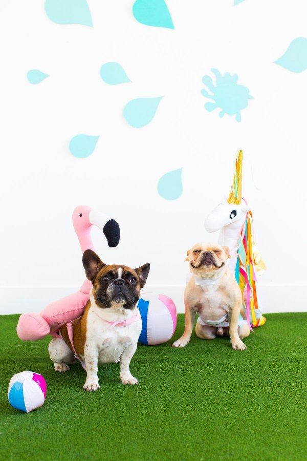 dog, play, dog like mammal, illustration,