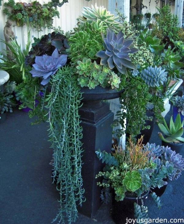 3 draping greenery 43 outstanding succulent gardens you