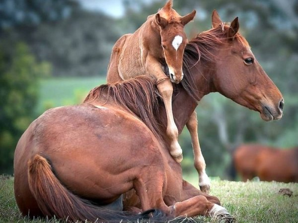 Foals - 7 Baby Animals to Look Forward to This Spring ... …