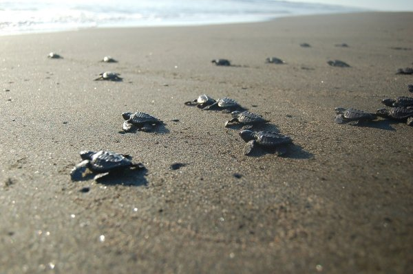 Dancing with Sea Turtles, Conservation Project, Mexico