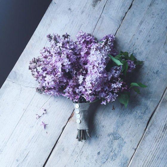 purple, blue, flower, lilac, plant,