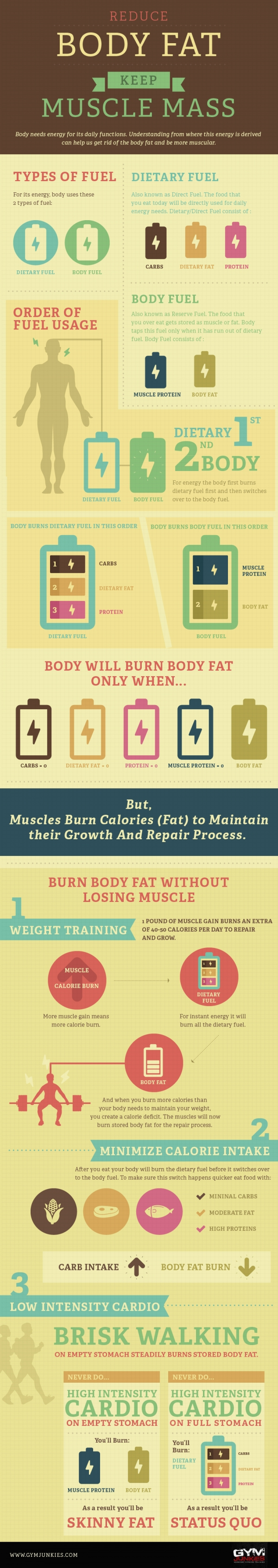 Reduce Your Body Fat and Keep Muscle Mass