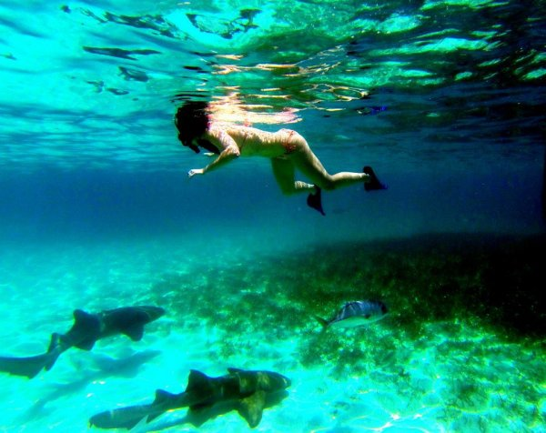Rub the Belly of a Giant Nurse Shark or Two in Ambergris Caye, Belize
