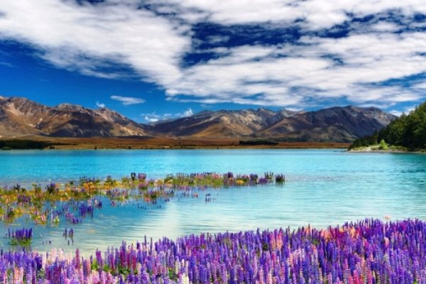 Commune with Mother Nature in Tekapo, New Zealand