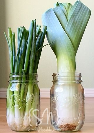 Grow Leeks and Onions in a Jar - 21 Easy Container Gardensu2026