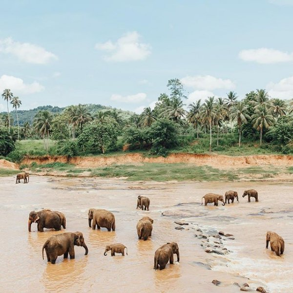 wildlife, herd, adventure, safari, working animal,