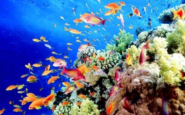 coral reef, habitat, coral reef fish, reef, marine biology,