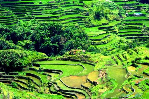 See the Rice Terraces in the Philippines