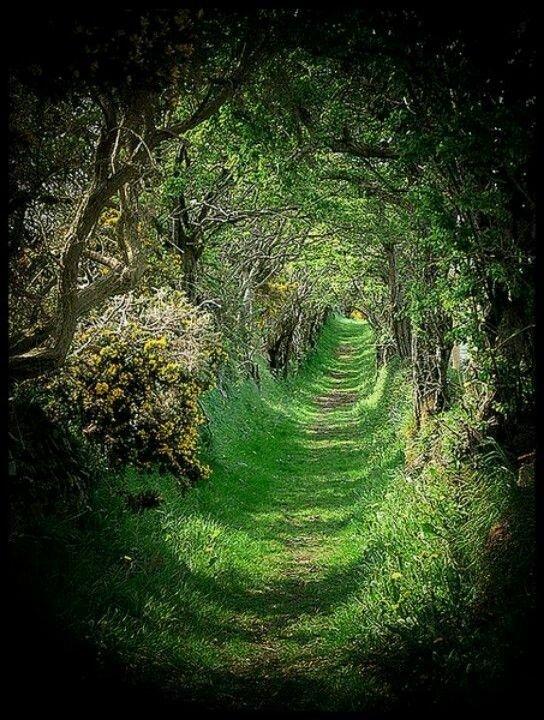 The Dark Hedges, Ballymoney