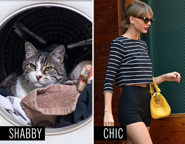 Your Clothes Are Covered in Pet Hair