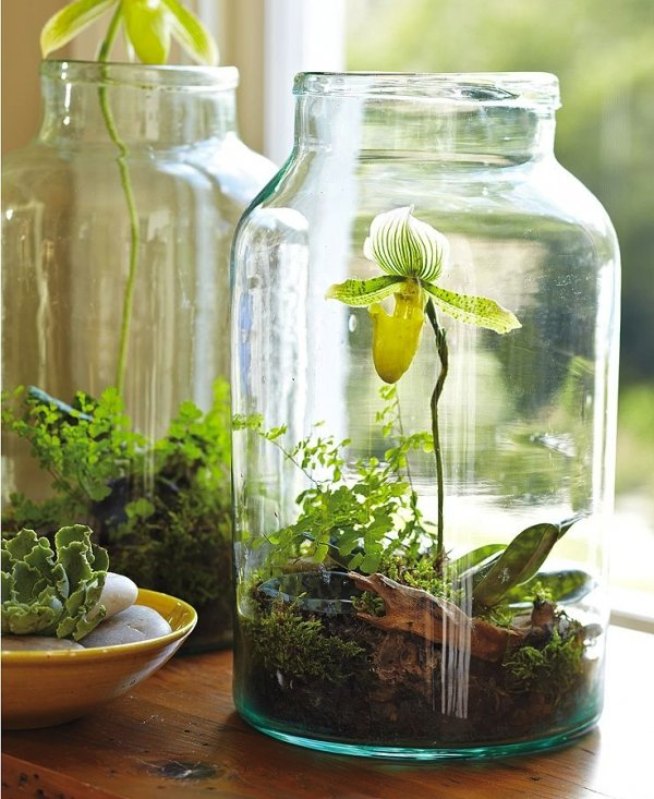 Garden in a jar 7 really cool things to do with mason for Cool things to do with mason jars