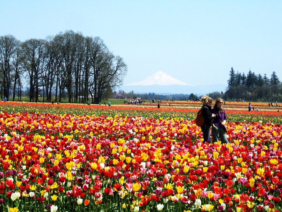 Oregon roses 8 gorgeous places to visit in spring 39 s for Where to go in oregon