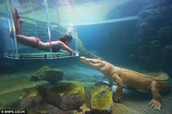 Crocodile Rock