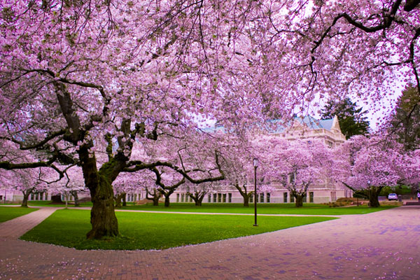 The Climate of Japan - 7 Geographical Facts of Japan ... …