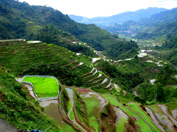 Banaue Philippines  city photos : Banaue Rice Terraces, The Philippines