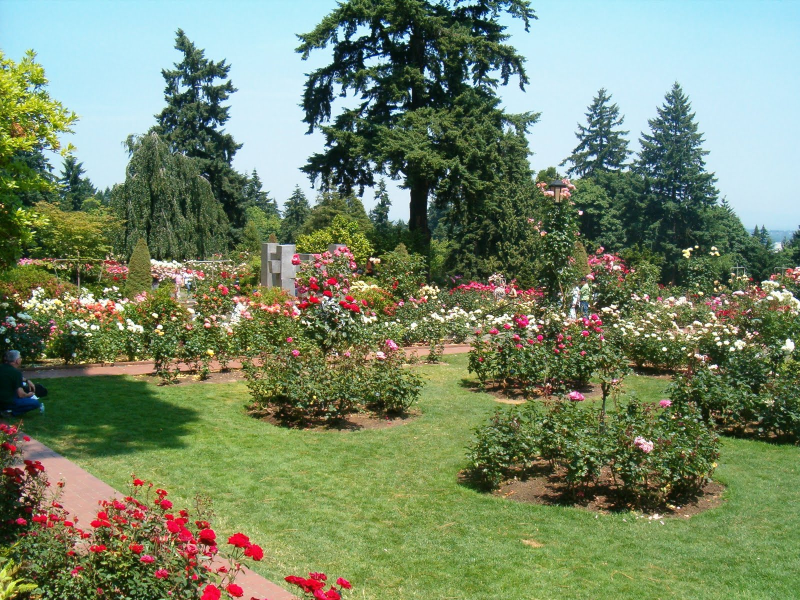 International Rose Test Garden 7 Sights To See In Portland