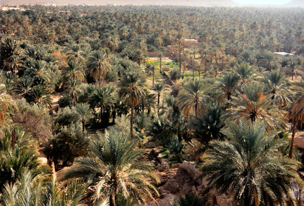 Al Ahsa Saudi Arabia  city photos : ... all that desert and those sand dunes and it comes in the form of Al