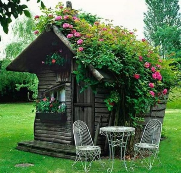 flower,outdoor structure,cottage,garden,yard,
