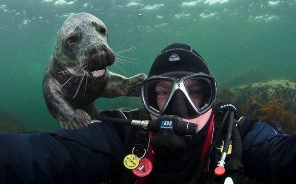 marine biology,biology,IBS,