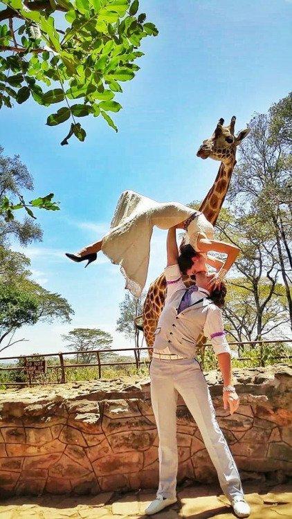 A Long-necked Witness at the Giraffe Center in Nairobi, Kenya
