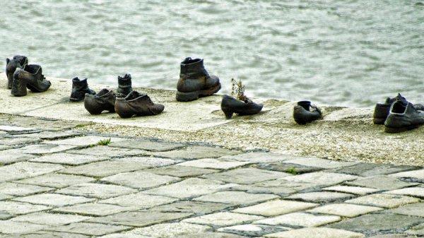 bird, vertebrate, duck, water bird, ducks geese and swans,
